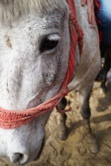 Shimla A caballo 05 - Shimla, lugares de interés: ciudad colonial al lado del Himalaya