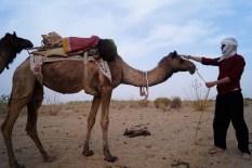 Jaisalmer - Safari desierto Thar