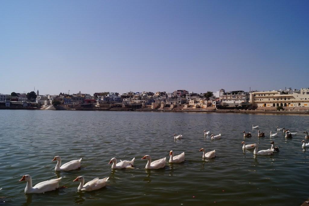Pushkar Lago de Pushkar 1 1024x682 - Visiting Pushkar; the 5 best things to do and see