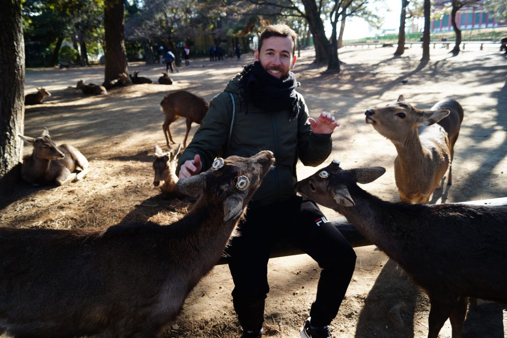 Nara Dando de comer a los ciervos 1024x682 - Nara Park and the Sacred Deer of Japan