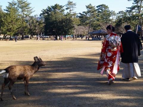 Nara Parque de Nara Vestidos tradicionales 1 - Nara, la ciudad de los ciervos sagrados