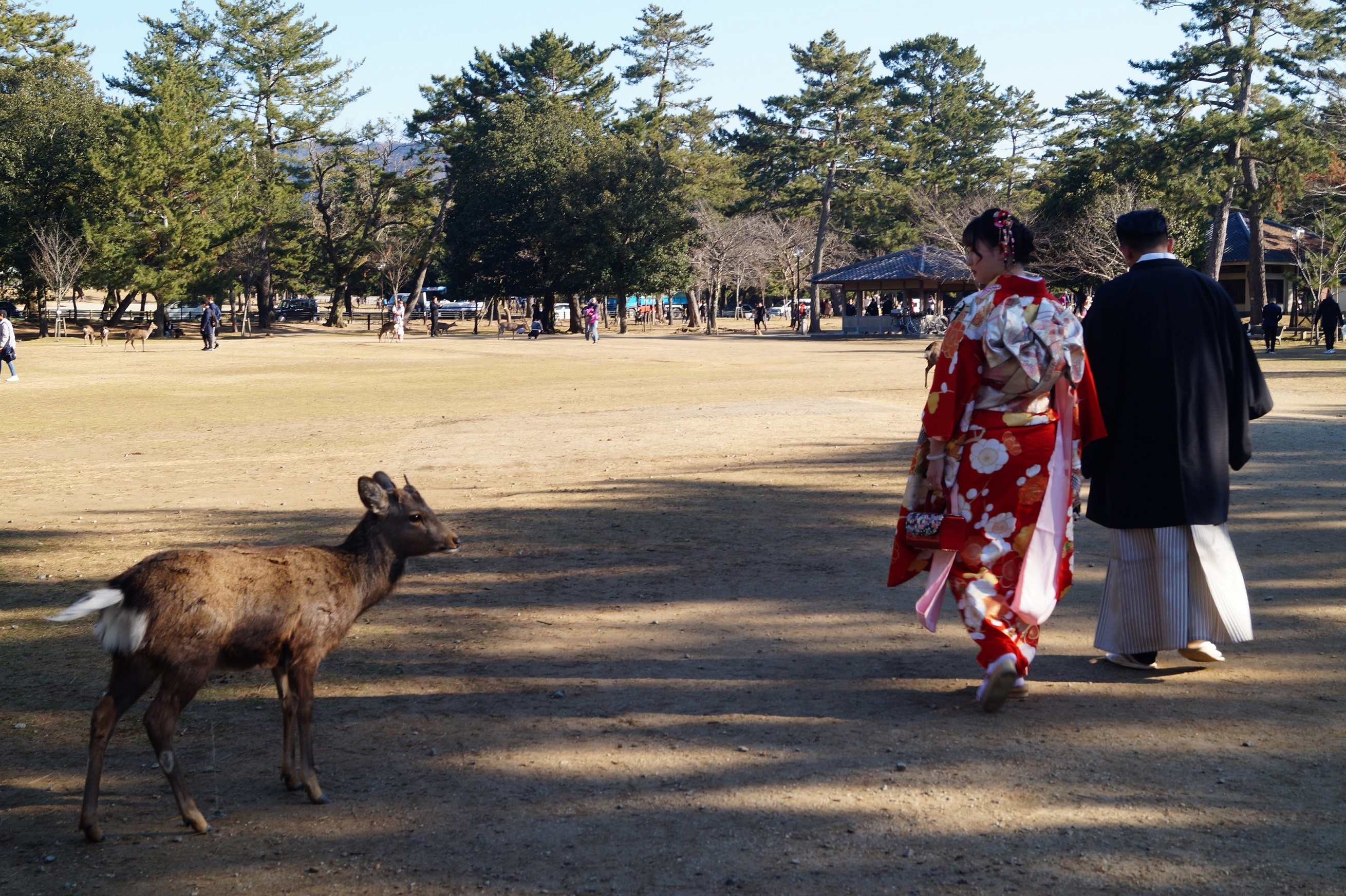 Nara Parque de Nara Vestidos tradicionales 2 - Nara Park and the Sacred Deer of Japan