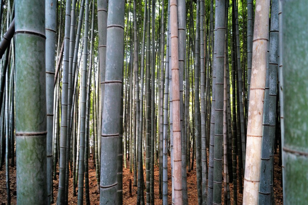 Kioto Arashiyama Bamboo Forest 1024x682 - Kyoto, the 9 most famous places to see in 4 days
