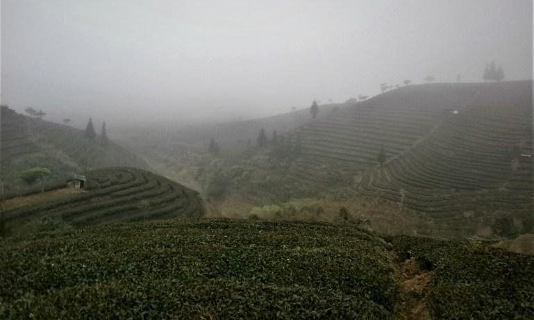 Viaje a Yunnan - Campos de Té de Puer