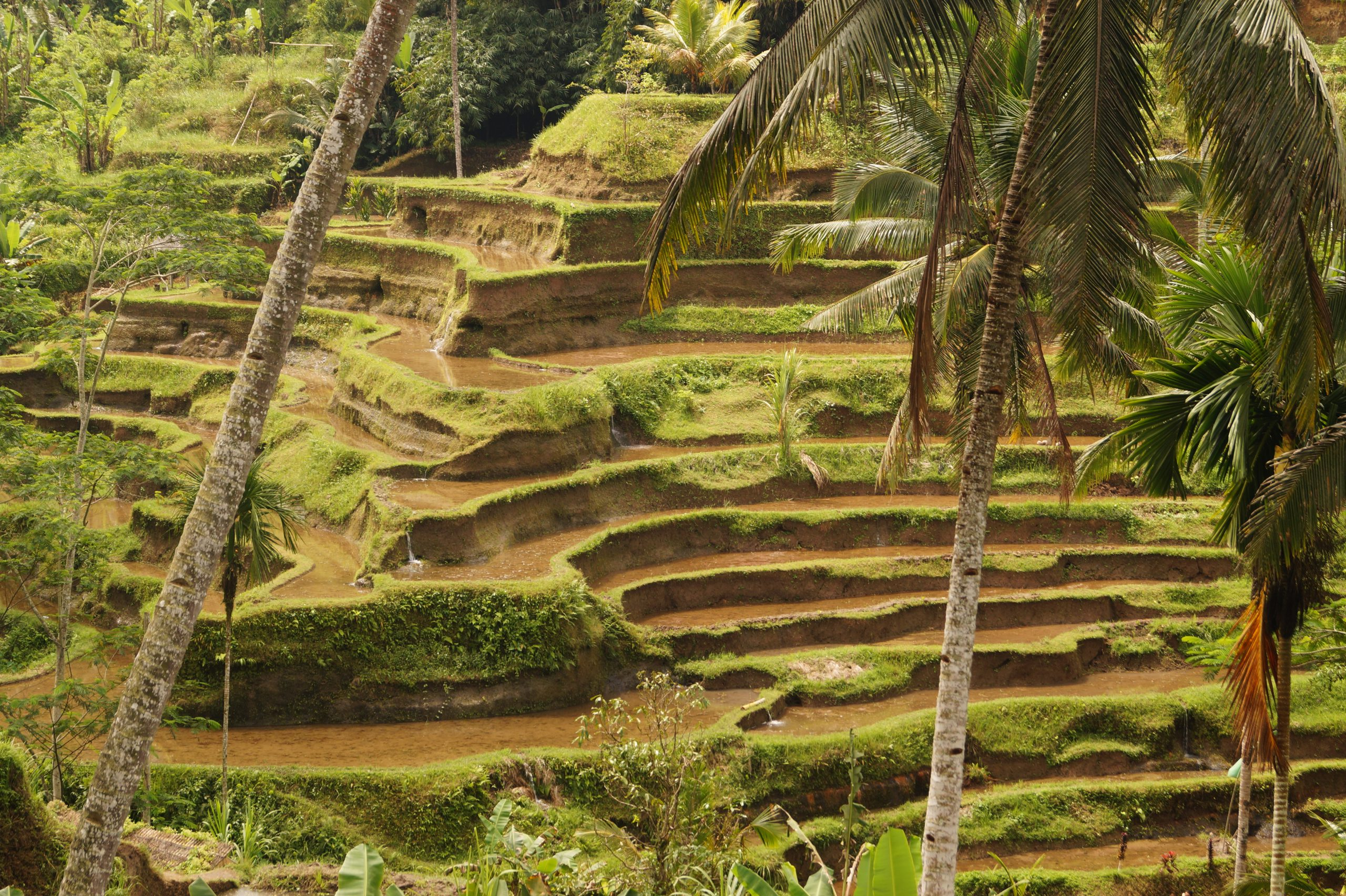 Bali Que ver en Ubud Arrozales de Tegalalang scaled - Top 5 places to see in Ubud in one day