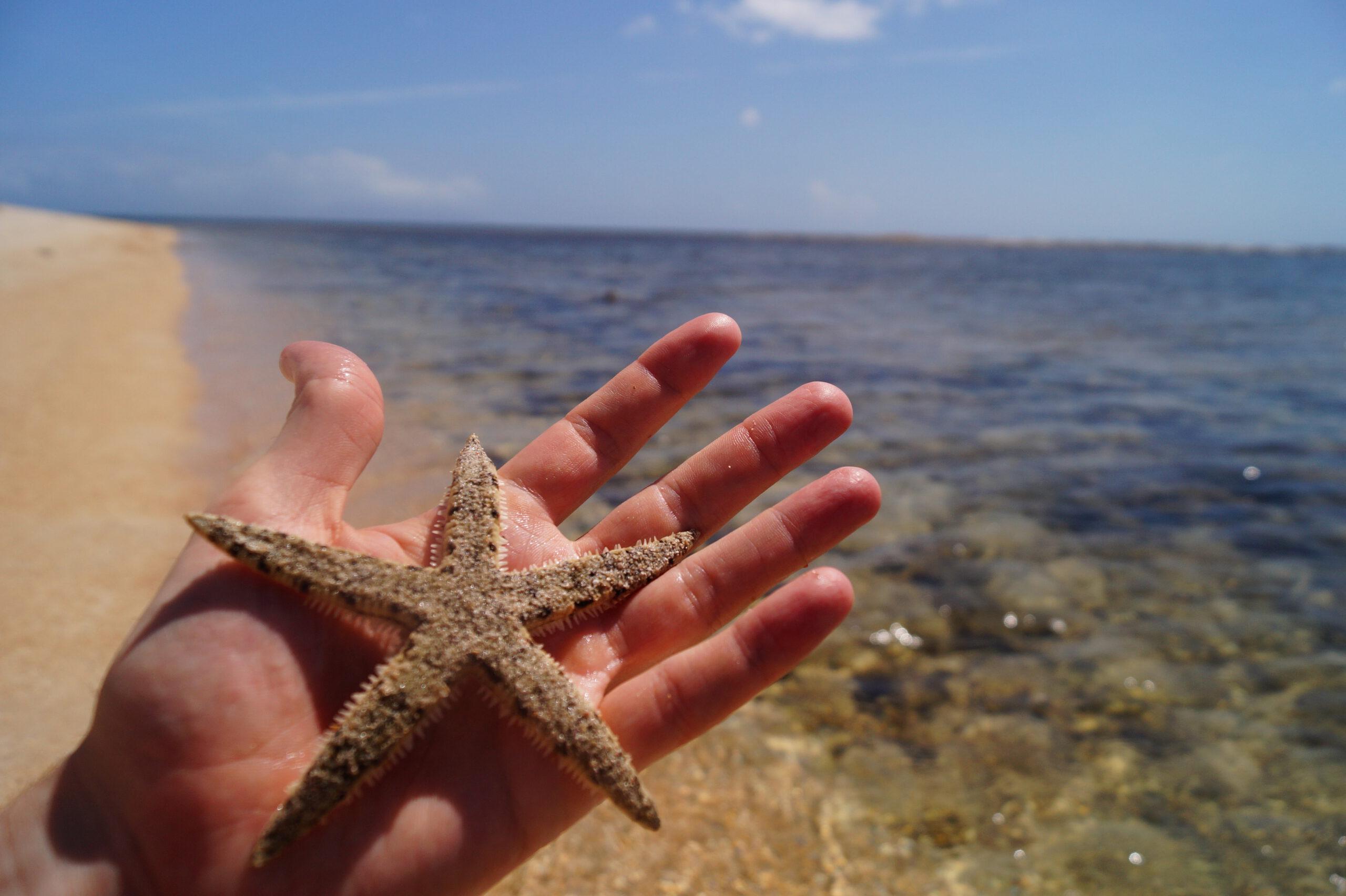 Gili Rengit Estrella de Mar scaled - Gili Gede and the Secret Gilis of Lombok, an undiscovered paradise