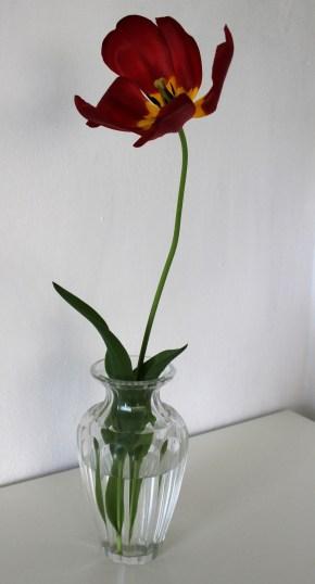 TulpeinderVase5