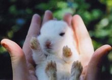 Cute-Animals-3-cute-animals-30317893-640-458