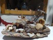 Holz dekoriert mit Korallen und Muscheln