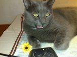Katze mit Blume