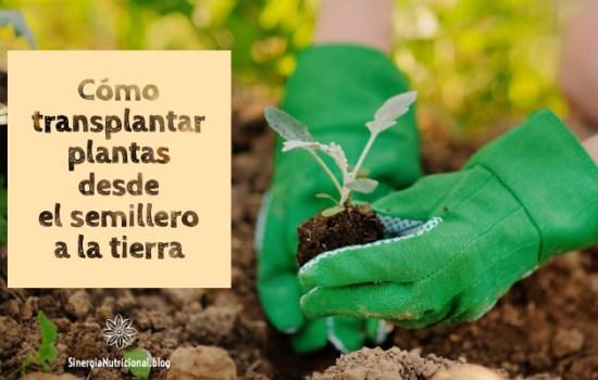 Cómo transplantar plantas desde el semillero a la tierra