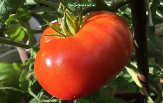 El tomate y su licopeno