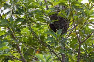 RW nest 28.2.16 Birder Dawn