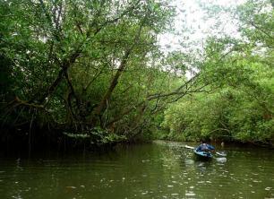 Mangroves LKP