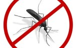 Essential Oils to Repel Mosquitoes