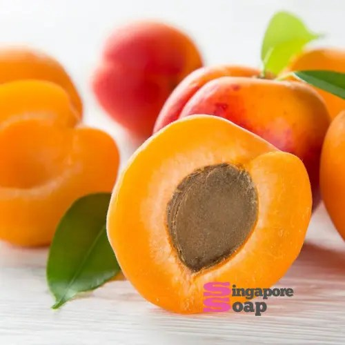 Apricot Kernel Oil (100% Pure & Expeller Pressed)
