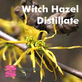 Witch Hazel Distillate (Pure & Alcohol Free)