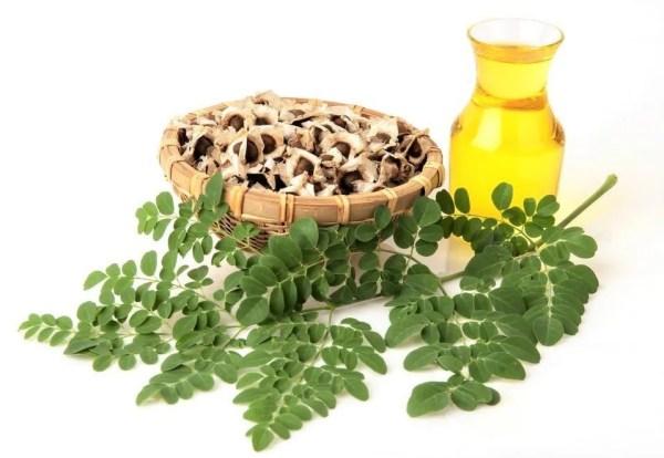Moringa Oil (Virgin Organic)