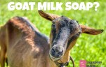 Where to Buy Goat Milk Soap in Singapore