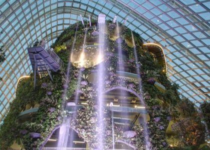 My Supernatural Affair at the Cloud Forest
