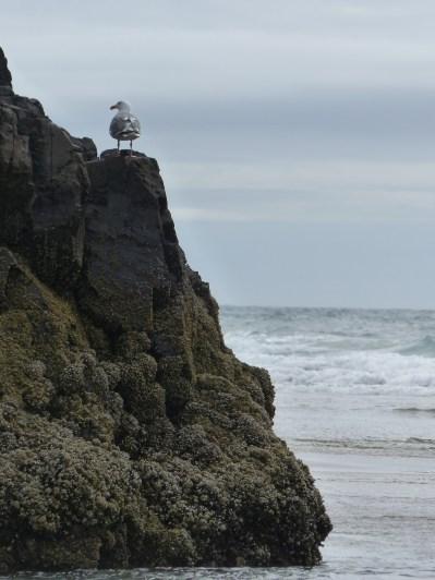 oregon-coast__crescent-beach_25