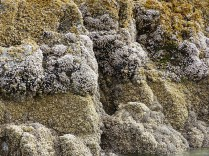 oregon-coast__crescent-beach_35