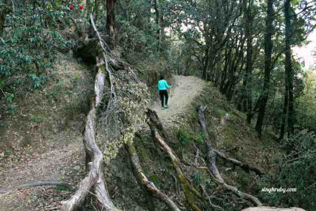 Trek Towards Nagtibba