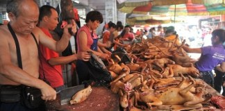 Dog eating festival in china