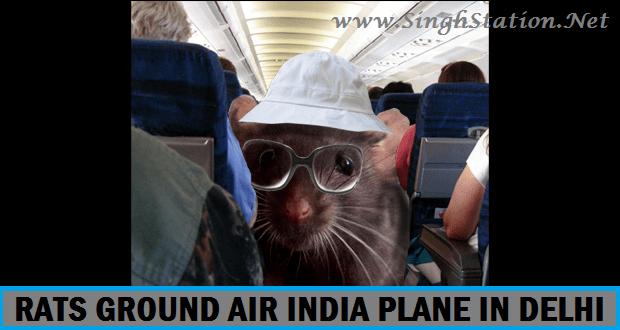 rats-air-india-plane