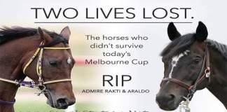 two-horses-admire-ratki-dead-melbourne-cup-day
