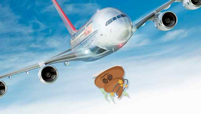 airline poo