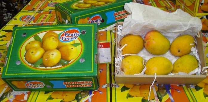 indian mangoes export australia