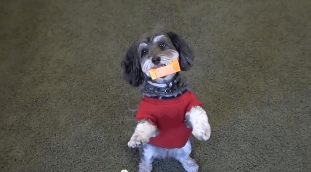 jasmine dog assistant
