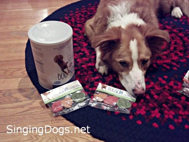 petag dog food
