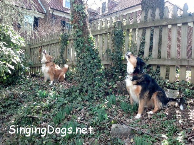 singing dogs cat in tree
