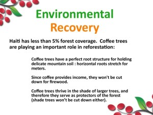 Coffee trees reforest Haiti.