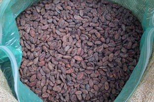 Haitian Cacao - first offering