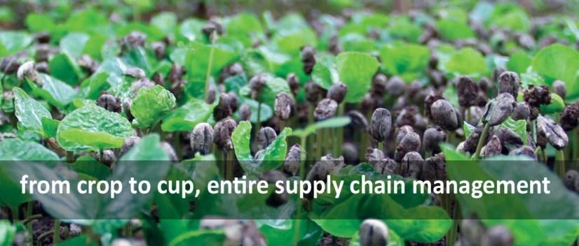 crop cup haiti