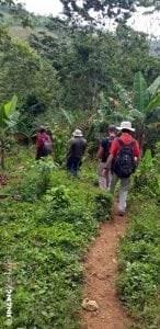 narrow path haiti coffee