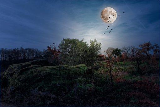 Song Story: Carolina Moon