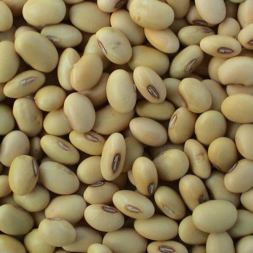 soy food products are good for health