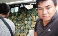 Pineapple are sold at cheapest price in Manipur