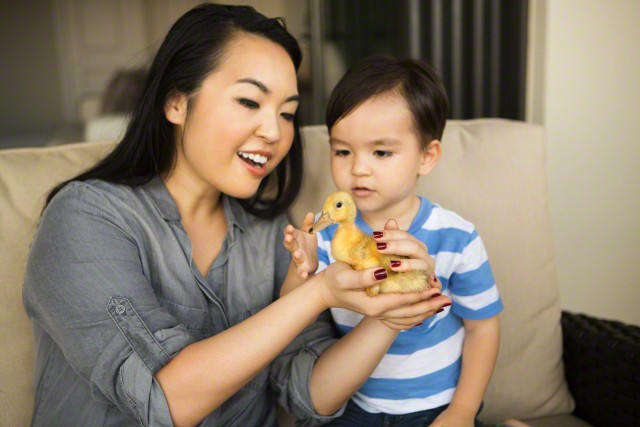 26 Apr 2015 --- Smiling woman holding a yellow duckling in her hands, her young son watching. --- Image by © Mint Images/Corbis