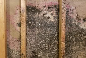 Black Mold Symptoms Removal and Cleaning | Single Source