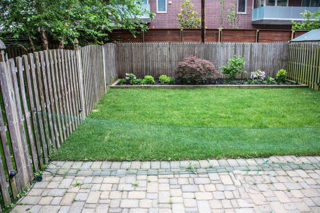 123 Willow Ave 1 - yard