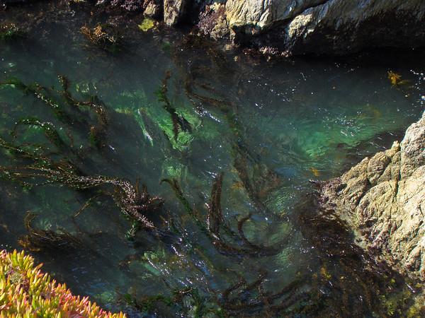 China Cove, Point Lobos, CA