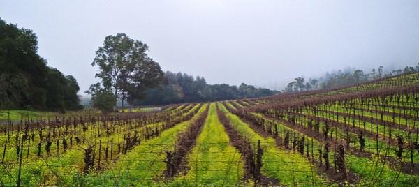 Jack London Vineyards