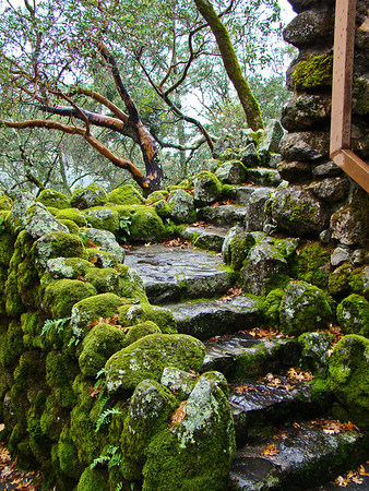 Mossy Stair
