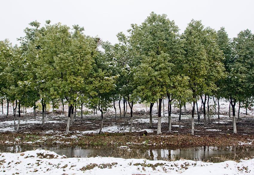 odc136-tree-screen-blog