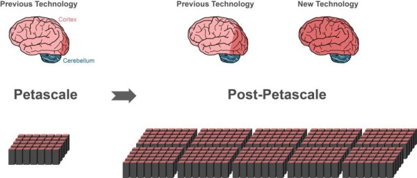 neuroscience-post-petascale-brain-simulation-algorithm-exascale